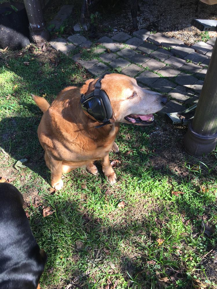Rhonda-dog-asher