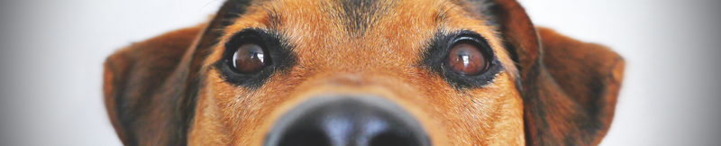 Blog-earplugs-for-coping-with-barking-dogs